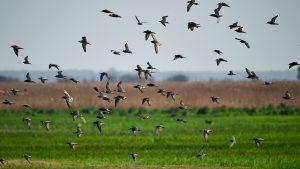 Migration of birds in a field